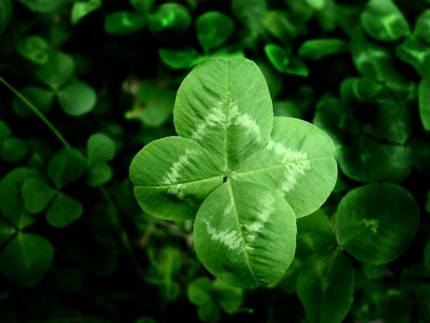 - Four leaf clover - Techno-Impressionist Museum - Techno-Impressionism - art - beautiful - photo photography picture - by Tony Karp