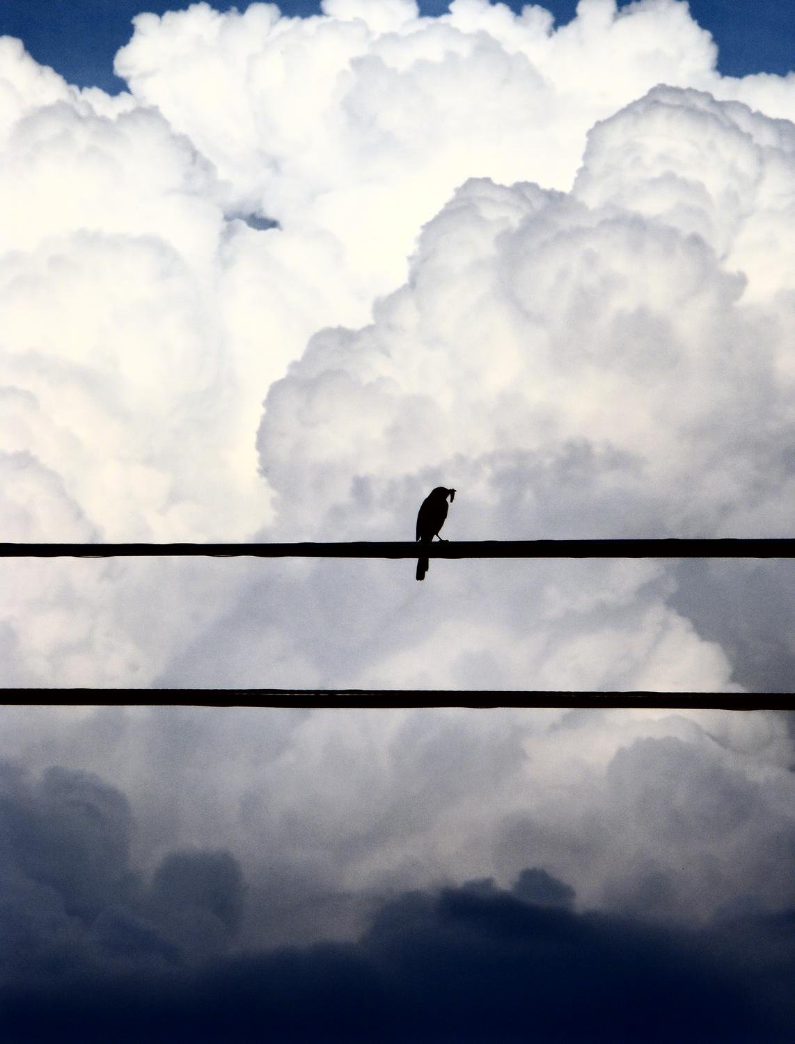- A bird on the wire - #2 - Techno-Impressionist Museum - Techno-Impressionism - art - beautiful - photo photography picture - by Tony Karp